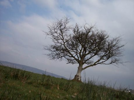 A lone tree standing
